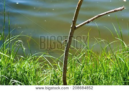 dragonfly on a branch on the lake in the summer heat