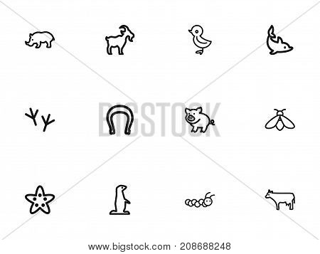 Set Of 12 Editable Animal Outline Icons. Includes Symbols Such As Rhinoceros, Cow, Bird And More