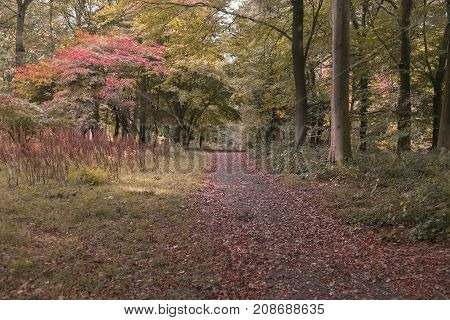 Nature vibrant autumn woodland path with fallen autumn leaves from trees