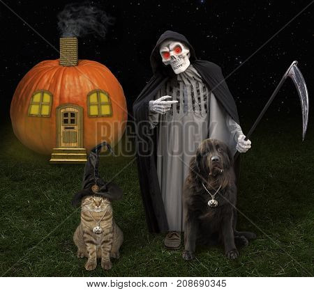 The cat with a big dog are standing next to a grim reaper. It's Halloween.