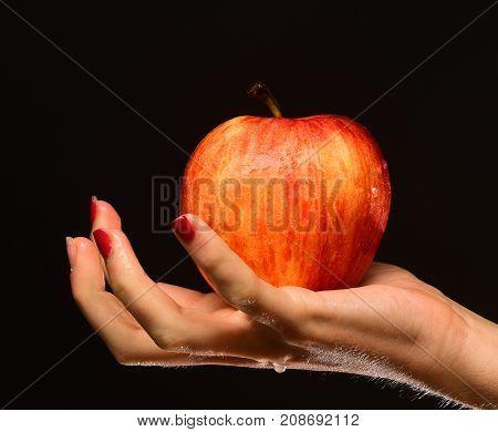 Female Hand Holds Fresh Fruit Isolated On Black Background
