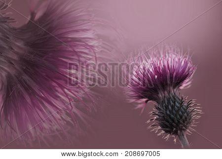 Floral pink-violet background. Flowers composition. A pink flower on a violet background. Closeup. Nature.