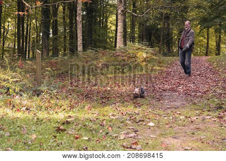 Middle aged adult male walking Yorkshire Terrier in autumn woodland