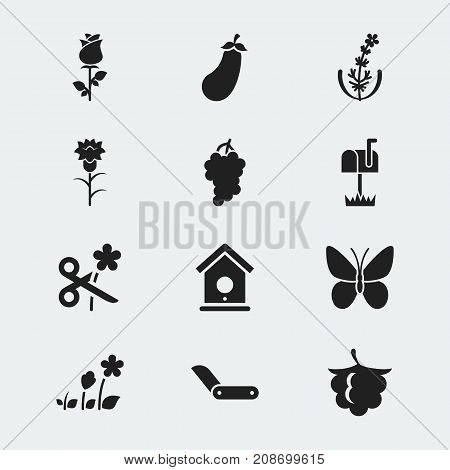 Set Of 12 Editable Gardening Icons. Includes Symbols Such As Lilac, Aubergine, Monarch And More
