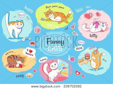 Funny cats poster with round images of their everyday life. Fluffy domestic animals entertaining and routine vector banner poster