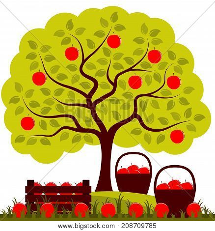 vector apple tree, wooden crate of apples and baskets of apples isolated on white background