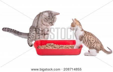 Two Funny Cats Playing In A Cat Toilet