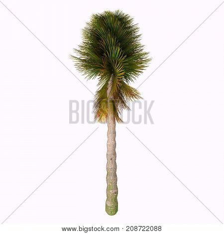 Triassic Cycad Tree 3d illustration - Cycad are seed plants with a long fossil history that were more abundant and more diverse than they are today.