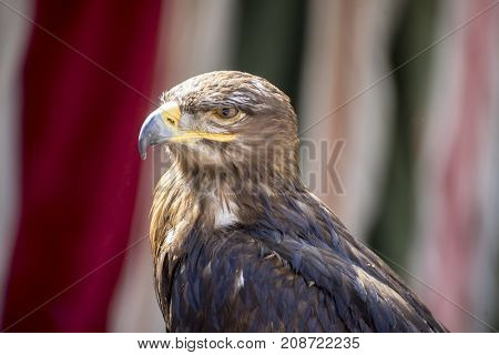 looking, beautiful eagle in a display of birds of prey
