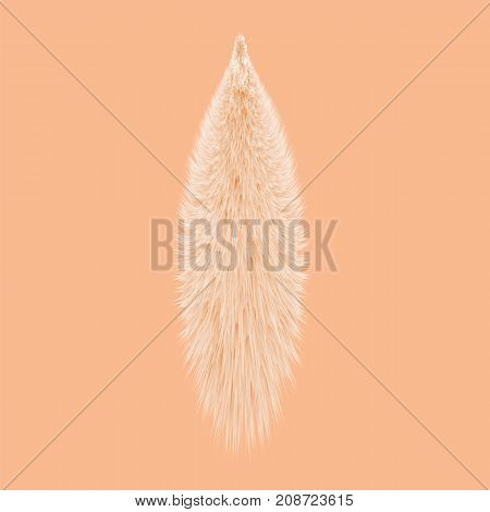 Animal Fluffy Fur Tail Isolated on Orange Background