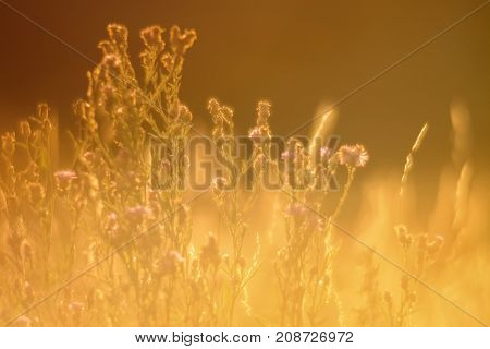 Soft Focus at golden hour grass and meadows