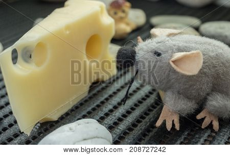 Mouse Looking At Cheese