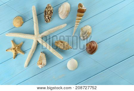 Starfish and sea shells on azure wooden background