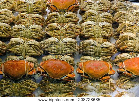 Rolls of Dungeness crabs display on ice at fresh seafood stall in public market