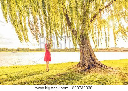 Woman with long curly brunette hair in red dress reaching to willow tree and wind by Potomac River and Arlington Memorial bridge in Washington DC during sunset