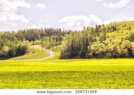 Open Field Meadow With Grass And Yellow Dandelion Flowers In Countryside Summer With Winding Road Go