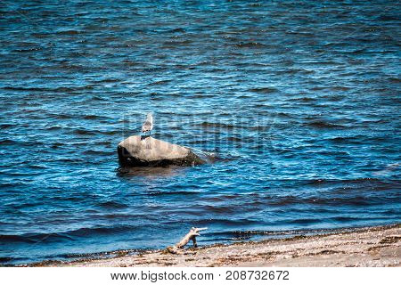 One Seagull Standing On Large Ocean Rock In Saint Lawrence River Gulf In Quebec, Canada During Sunny