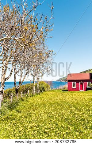 Red Painted Shed With Yellow Dandelion Flowers And View Of Saint Lawrence River Gulf In La Martre In