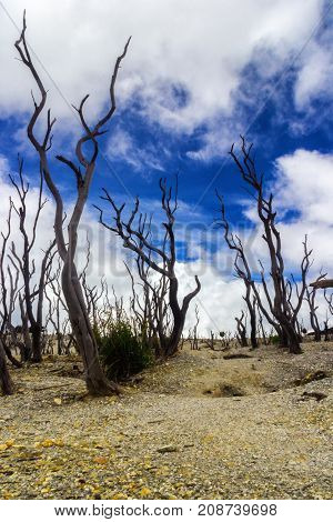 A view of dead forest in Mt. Papandayan, Indonesia.