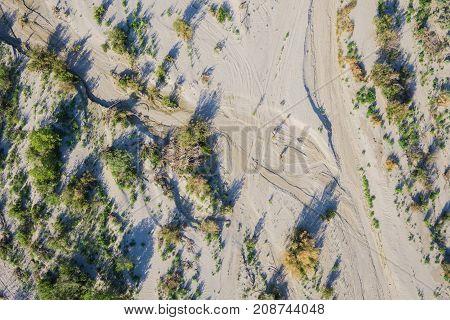 Brush In Mojave Desert