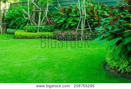 Green lawn, the front lawn for background, Garden landscape design