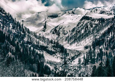 The valley of snow-capped mountains many trees on the slopes a hard-to-reach place tinted in black and white. Audakhara, Relict national park of Ritsa. Abkhazia.