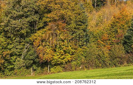 Colorful trees in autumn. The picture was taken at the middle of October on the Uetliberg mountain in the Swiss canton of Zurich.