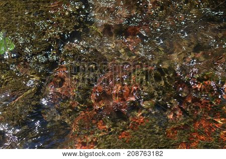 Picturesque River Water Bottom