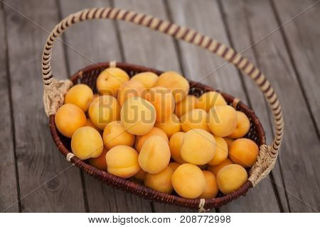 Delicious ripe apricots in the basket on a wooden background. Ready for macking jam or compote.