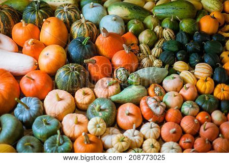 Horizontal photo of heirloom diffrent varieties squashes and pumpkins.