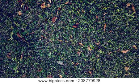 Yellow leaves the grass in autumn, spring grass on the field, view from the top, fallen leaves scattered, autumn background the wild.
