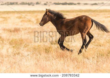 a beautiful wild horse (mustang) in the Utah desert