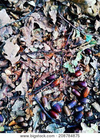 Fallen things from the tree in a heap