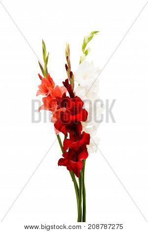 wedding bouquet gladiolus flower on white background