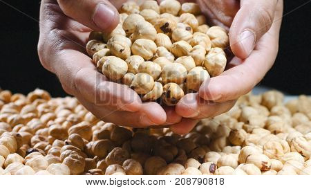 Big hands touching and picking huge amount of riped hazelnuts