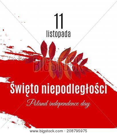 Poland independence day translation on Polish. Grunge Poland flag and mountain ash leaf placard. Vector illustration