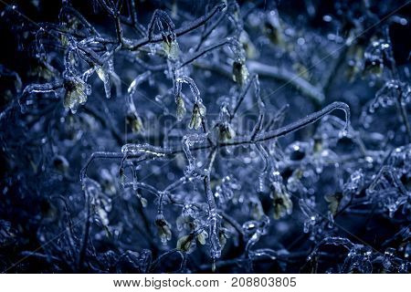 Sudden ice storm freezing leaves andf branches in this unusual night scene. Macro shot with amazing detail.