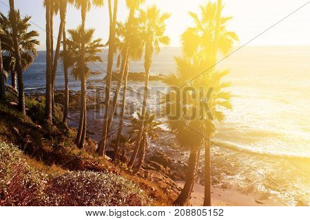 tropical background palm trees sun light holiday travel design card filter pastel effect. Tropical landscape with palms. Palm tree crown on blue sky. Sunny tropical island toned photo. Sunny blooming tropical nature. Exotic island travel banner template