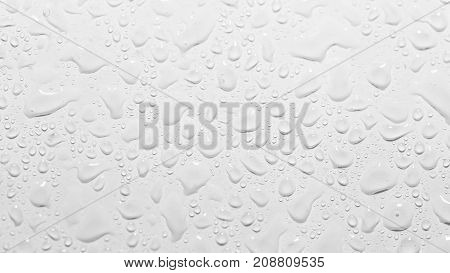 water drops on a white background. close-up