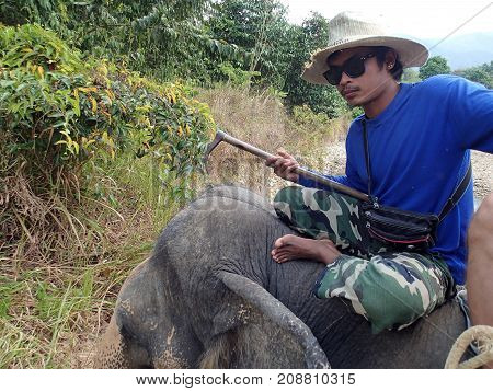KO CHANG ISLAND, THAILAND - JANUARY 16.2013: Mahout rests on the back of an elephant in the jungle