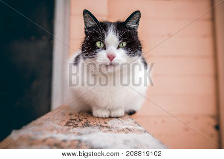 A large black and white cat with green eyes is sitting on the railing of the stairs at the entrance of the house and looks into the frame. Close-up. Background is blurred