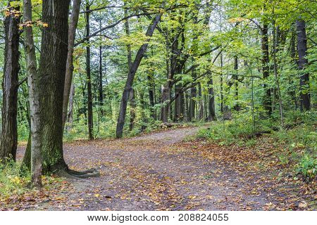 Orange Leaf Covered Woodland Footpath Winding Through Autumn Forest