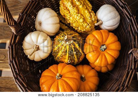 Plenty of Colorful Pumpkins collected in the Wicker Basket for Halloween and Thanksgiving in the Autumn Season Holiday Concept Top View