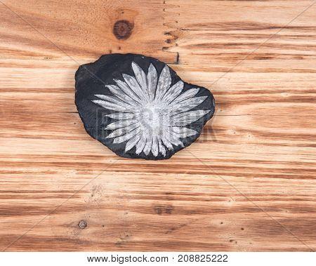 The white flower  Chrysanthemum stone on vintage wooden background