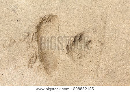 Footprint and paw print in sand beach