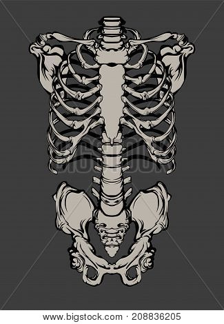 Hand drawn line art anatomically correct human ribcage. White over black background vector illustration. Print design for t-shirt or halloween costume.