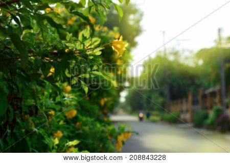 the blurred of the green trees and yellow flowers beside the road in the morning