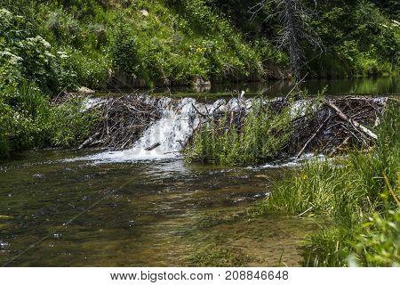 Beaver Dam on Huntiington Creek in Emery County Utah