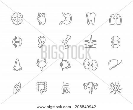 Set of vector anatomy and organs line icons. Neuron, penis, uterus, intestine, muscle, nose, bladder, eye, liver, kidney, heart, brain, stomach, tooth, lung, joint, ear, bone, hair, backbone and more.
