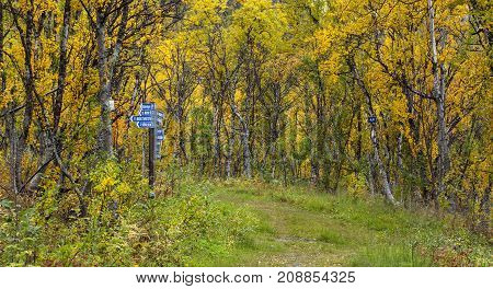 Sign poles by the side of a Navvy Road Trail. Colorful trees, forest in the background.